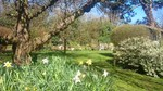 Sunny picture of a garden in spring